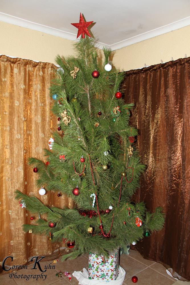 Xmas tree_1257