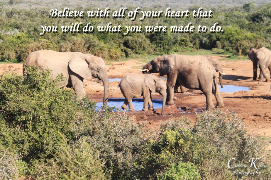 World Cup Tour_3116addo