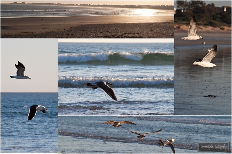 Brittania Bay, West Coast, South Africa