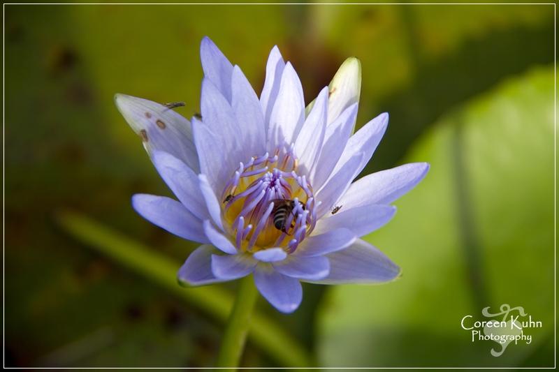 BioGarden_0546