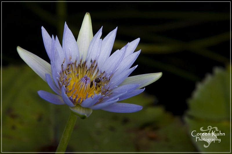 BioGarden_0549