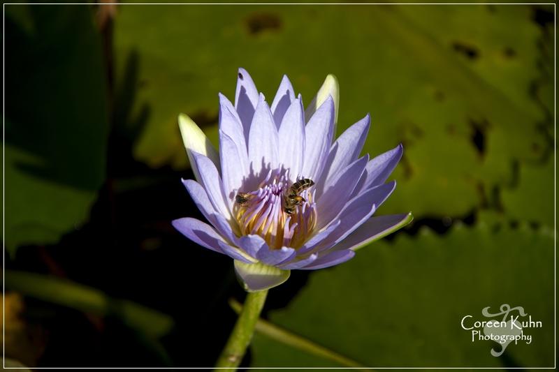 BioGarden_0553