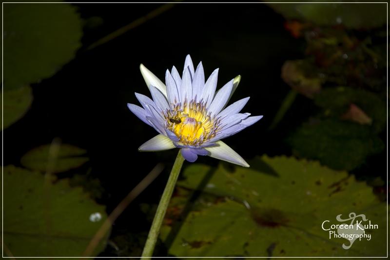 BioGarden_0555