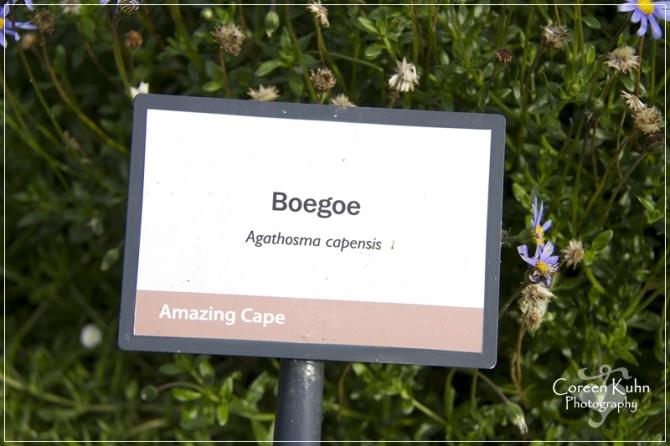 BioGarden_0567