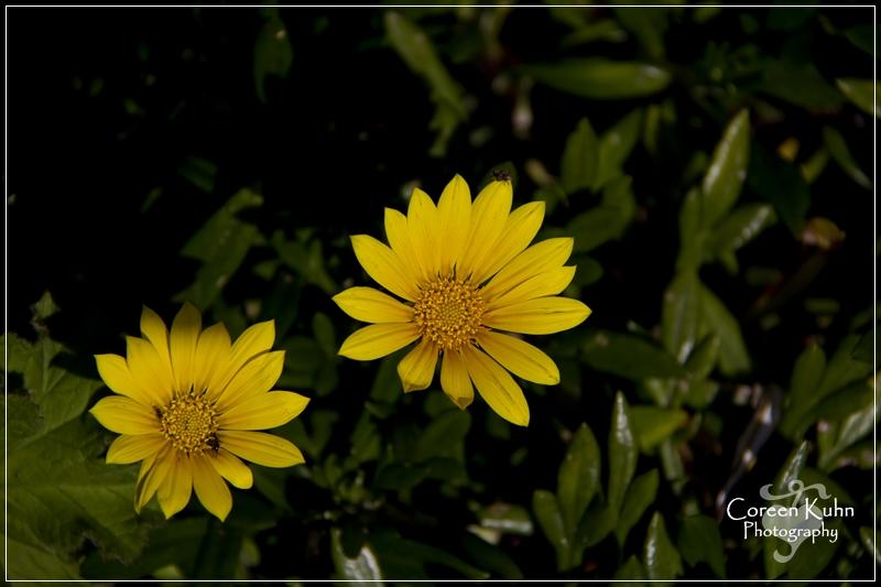 BioGarden_0585