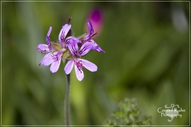 BioGarden_0597