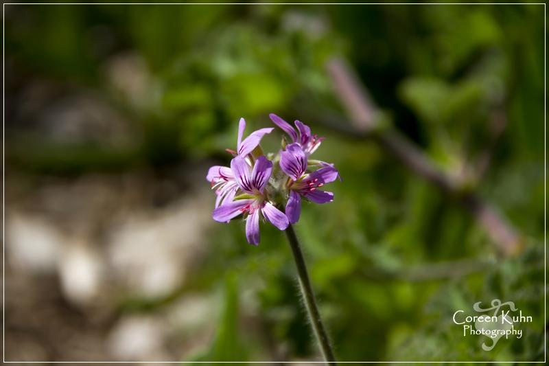 BioGarden_0599