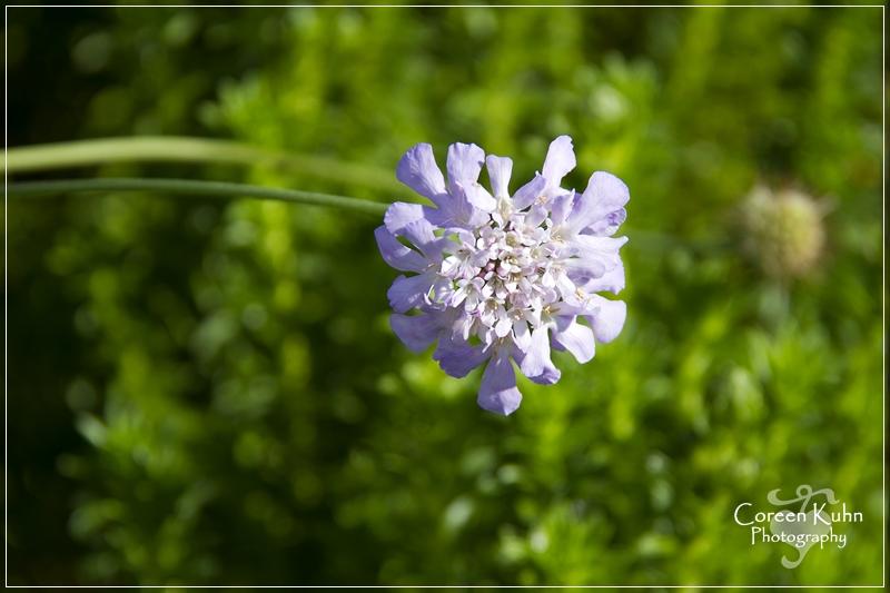 BioGarden_0624