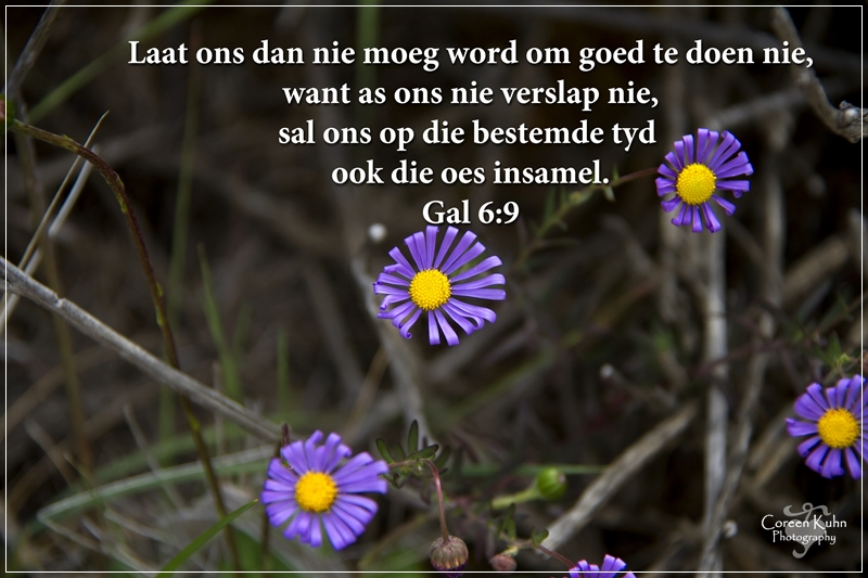 My Photo's with a Afrikaans Quote #8