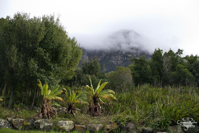 Kirstenbosch: Part 3