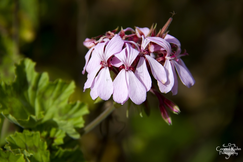 Kirstenbosch: Part 6
