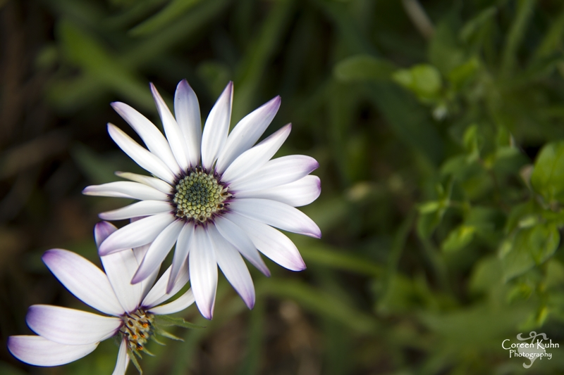 Kirstenbosch: Part 8