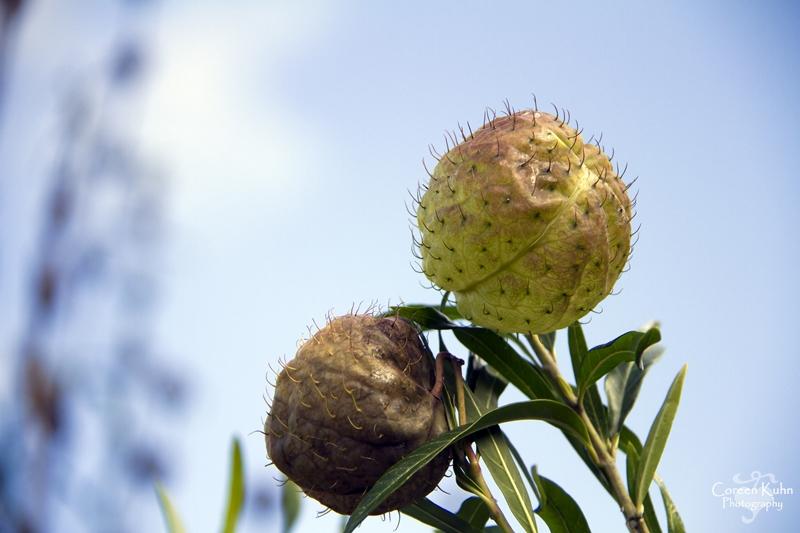 Kirstenbosch: Part 13