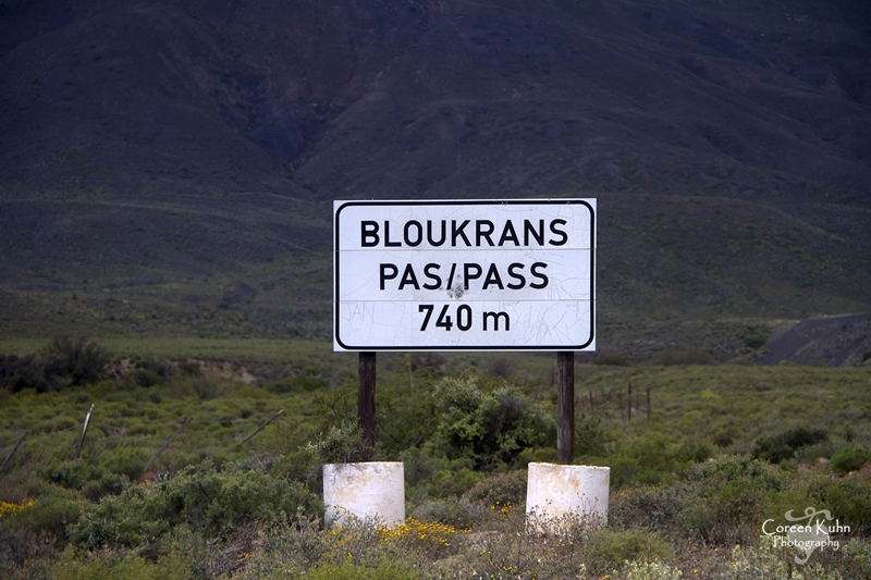 On our way back to Calvinia from Tankwa Karoo National Park