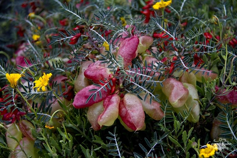 S-U-C Parks & Flower Tour_0946