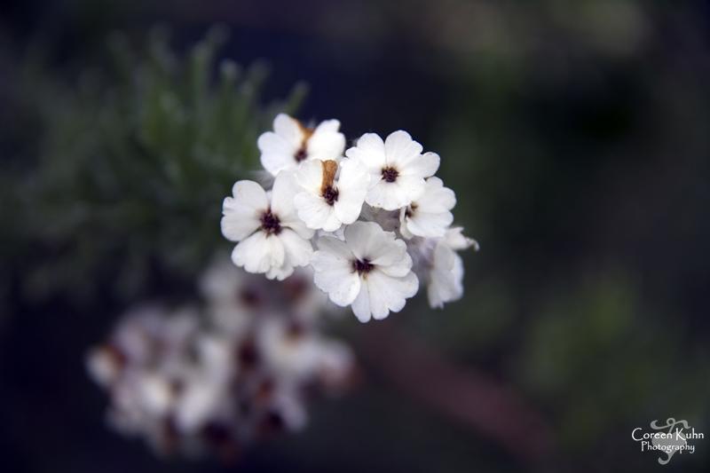 Intaka_8585