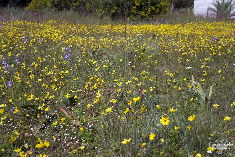 S-U-C Parks & Flower Tour_1319