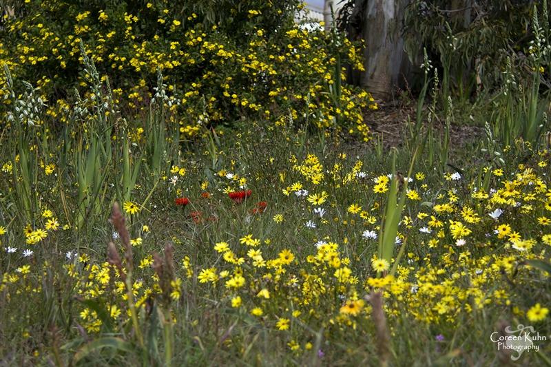 S-U-C Parks & Flower Tour_1329
