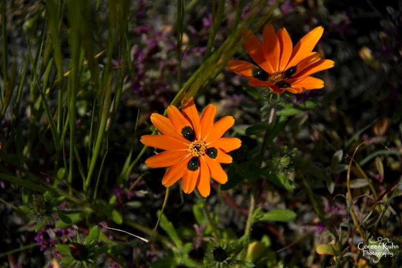 S-U-C Parks & Flower Tour_1345