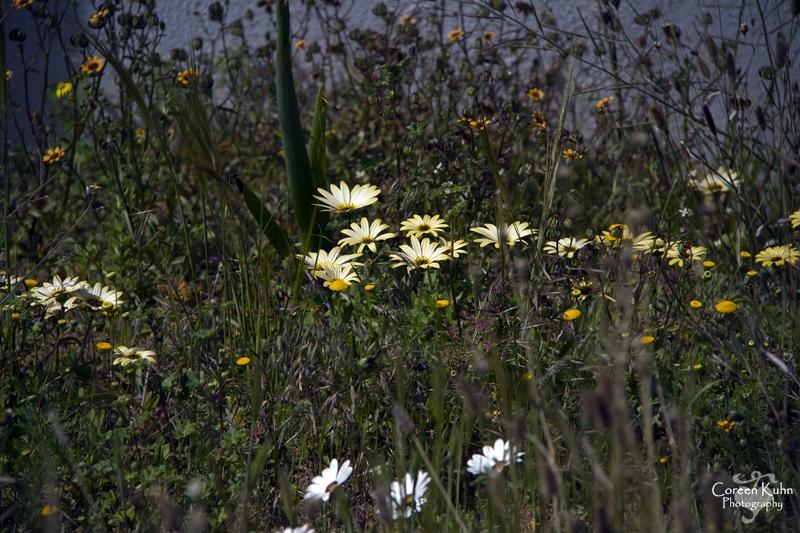 S-U-C Parks & Flower Tour_1349