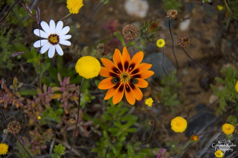 S-U-C Parks & Flower Tour_1352