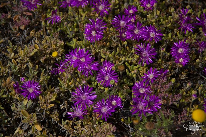 S-U-C Parks & Flower Tour_1358