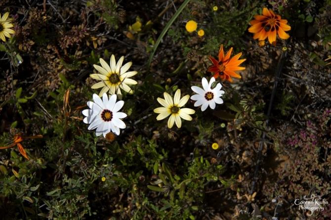 S-U-C Parks & Flower Tour_1364