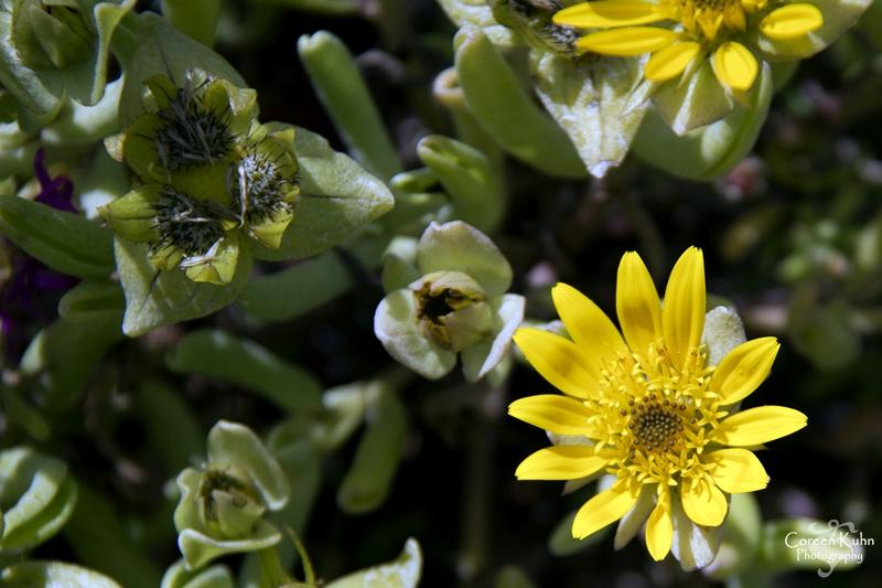 S-U-C Parks & Flower Tour_1367