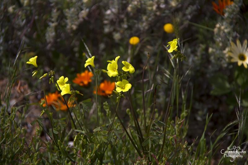 S-U-C Parks & Flower Tour_1375