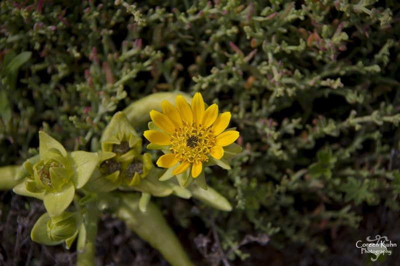 S-U-C Parks & Flower Tour_1377
