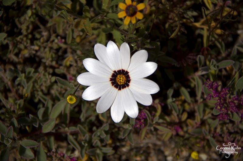 S-U-C Parks & Flower Tour_1401