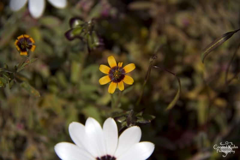 S-U-C Parks & Flower Tour_1403