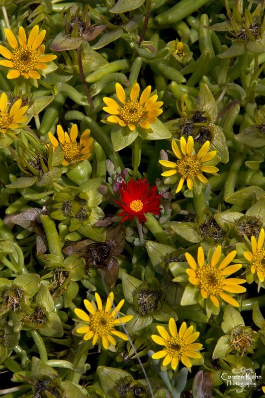 S-U-C Parks & Flower Tour_1437