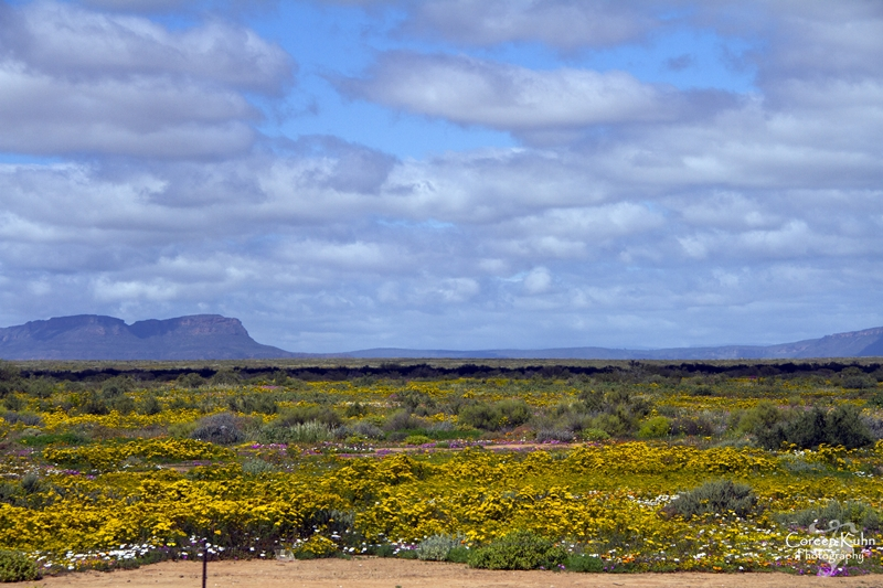 A Blast from the past… Calvinia to Kraaifontein 2013: Part18
