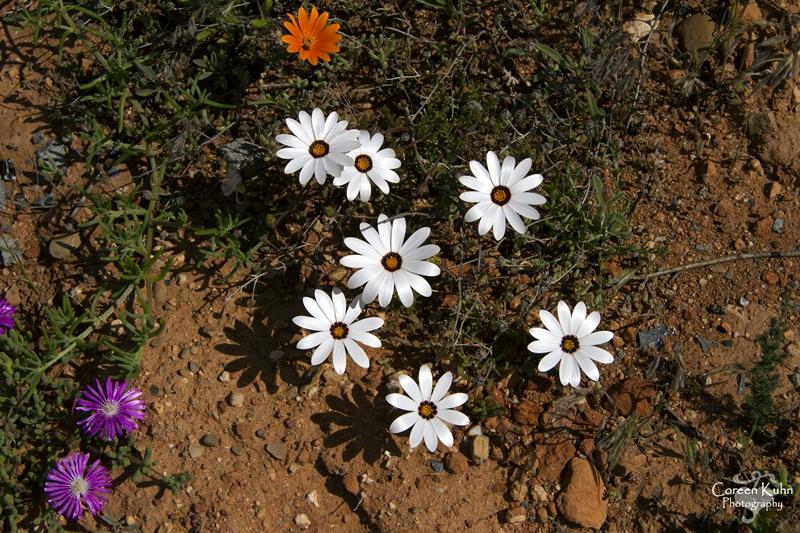 S-U-C Parks & Flower Tour_1450