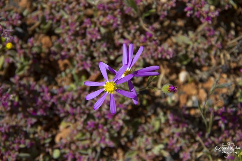 S-U-C Parks & Flower Tour_1454