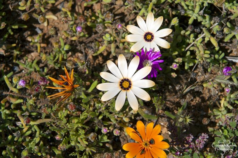 S-U-C Parks & Flower Tour_1457