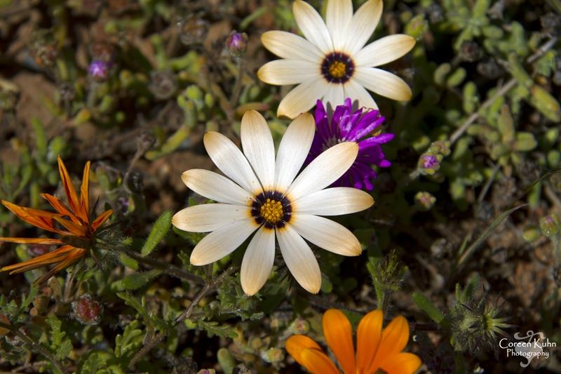 S-U-C Parks & Flower Tour_1458