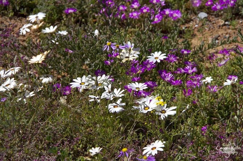 S-U-C Parks & Flower Tour_1463