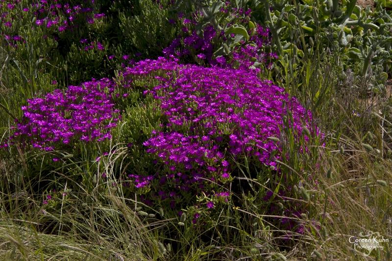S-U-C Parks & Flower Tour_1469