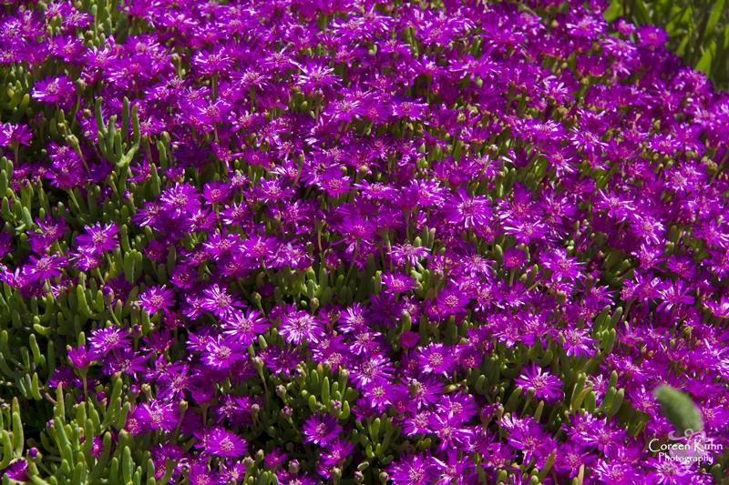 S-U-C Parks & Flower Tour_1472