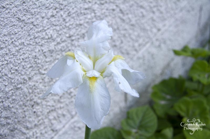 Garden_3821