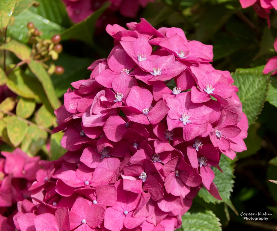 Friendly Friday Weekly Challenge – The ColourPink