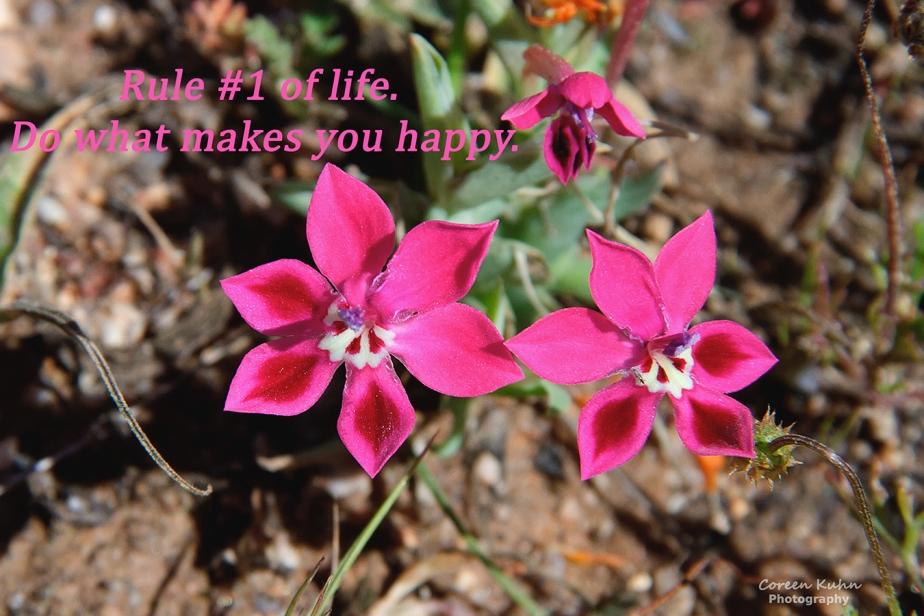 My Photo Someones Words/Quote:23/365