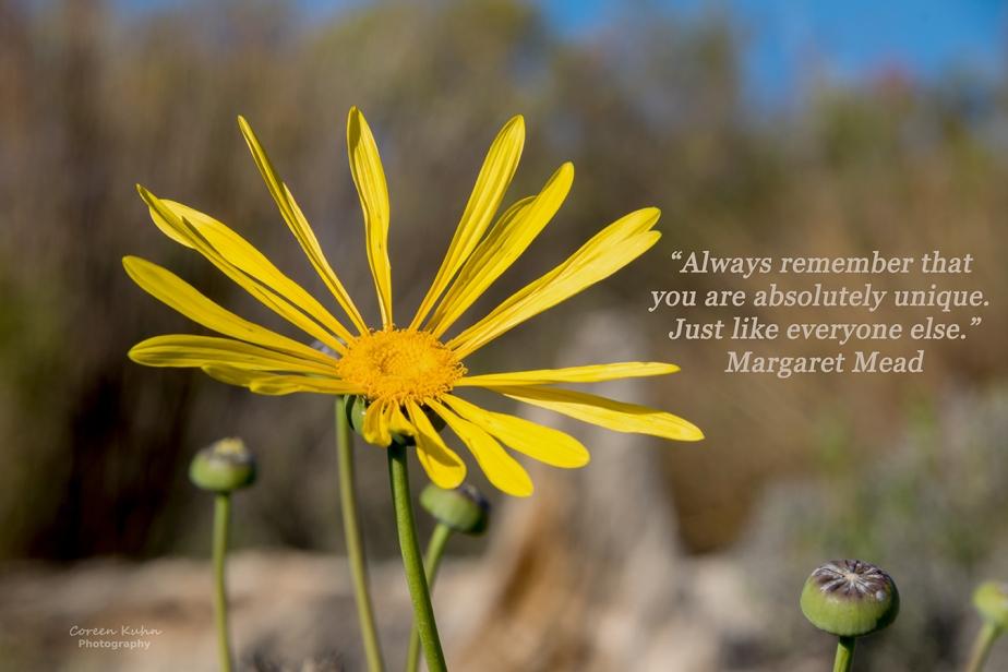 My Photo Someones Words/Quote:30/365