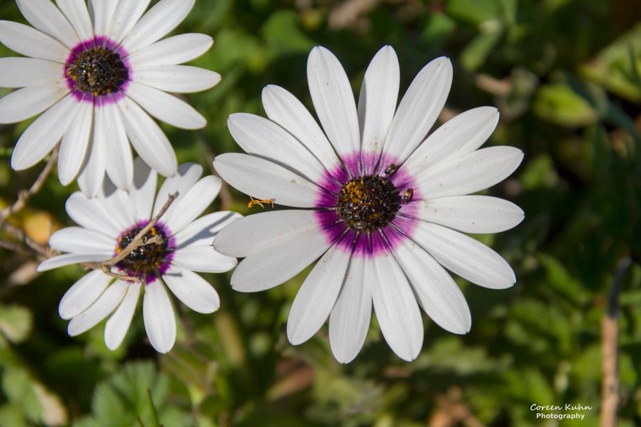 Flower of The Day: 27 September2020