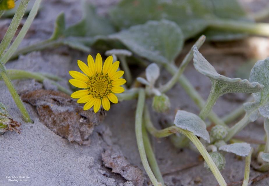 Flower of the day: 30 September2020