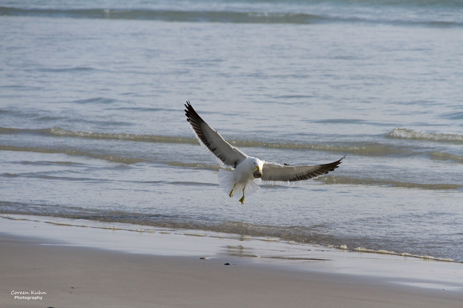 Tuesday Beach Vibes: 24 November2020