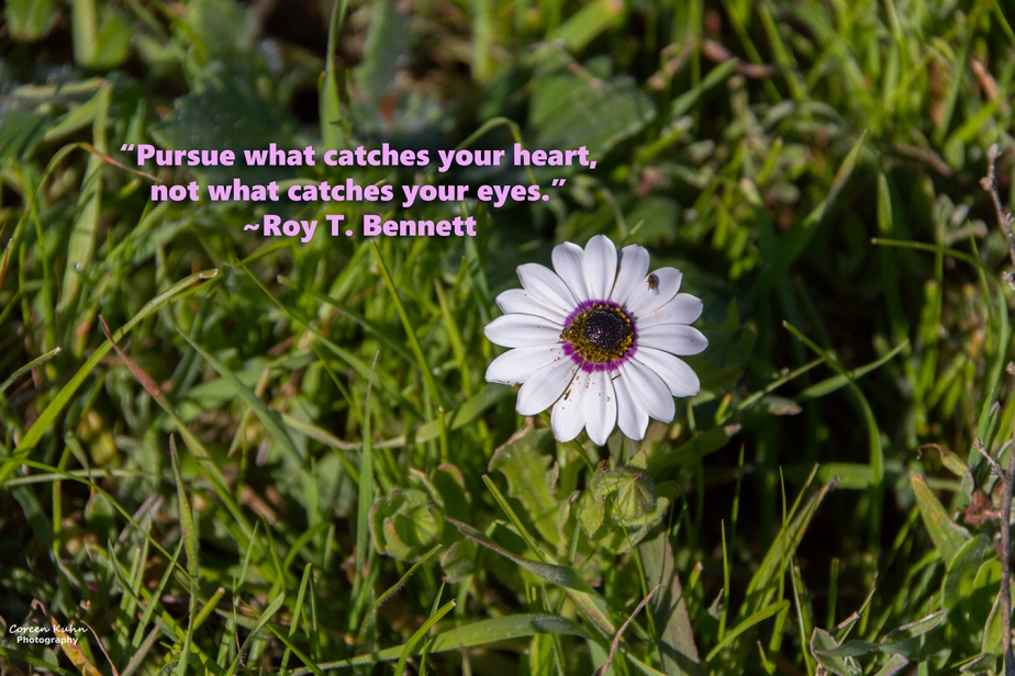 My Photo Someone's Quote: 104/365