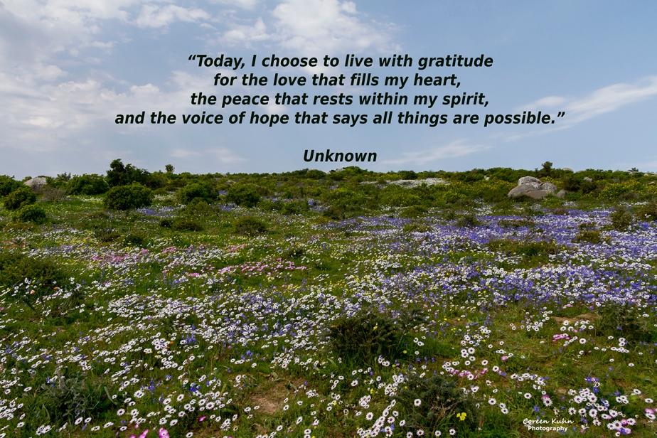My Photo Someone's words/Quote95/365
